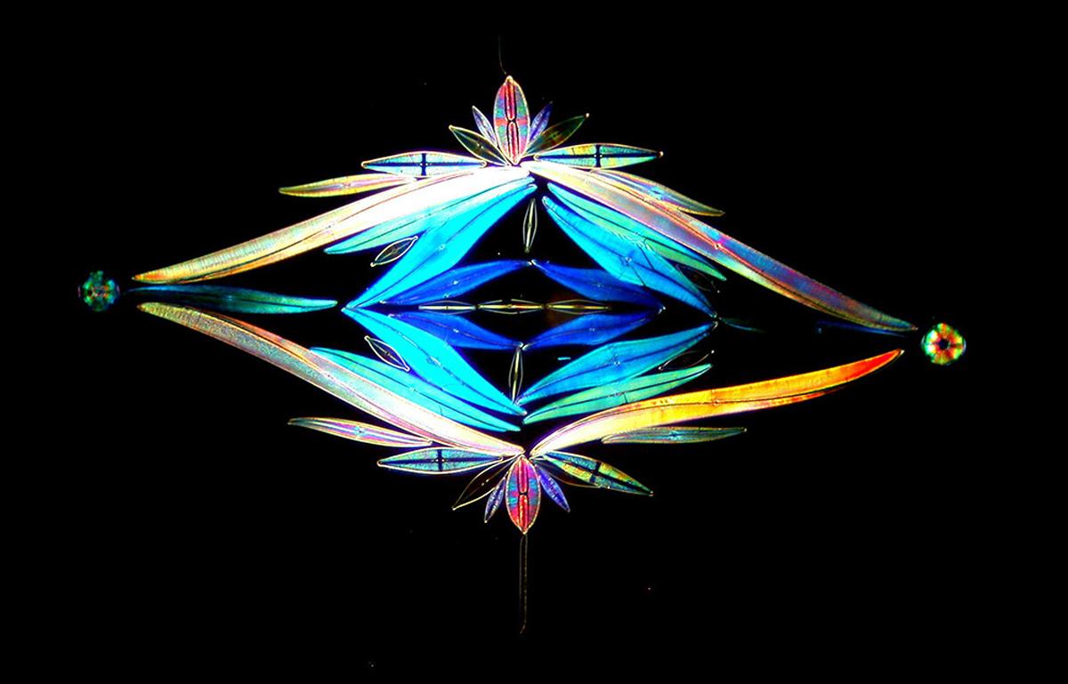 diatom-7
